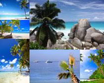 大海椰树摄影高清图片
