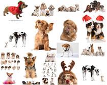 可爱的动物狗拍摄高清图片