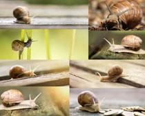 蝸牛昆蟲攝影高清圖片