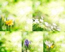 春天绿色花草摄影高清图片
