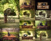 树木里的电话机摄影高清图片