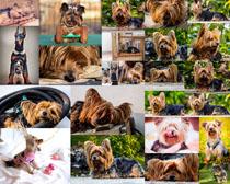 可爱金毛狗摄影高清图片