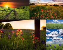 花朵草地风景摄影高清图片