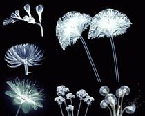 透明花朵影子摄影高清图片