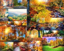 树木景观摄影高清图片