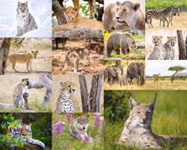 猎豹猴子大象摄影高清图片