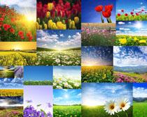美丽的花朵风景拍摄高清图片