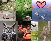 猫头鹰仙鹤摄影高清图片