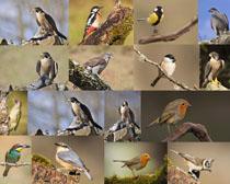 小鸟动物摄影时时彩娱乐网站