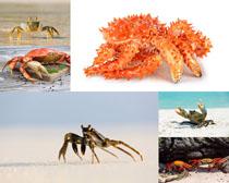 海边沙滩上的蟹摄影时时彩娱乐网站