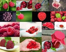 手中的果子摄影高清图片