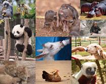 可爱小动物摄影高清图片