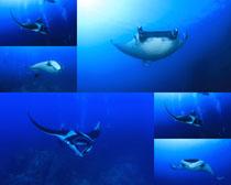 海底生物摄影时时彩娱乐网站