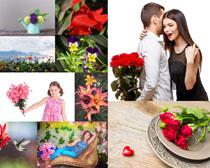节日花朵亲情爱情摄影高清图片
