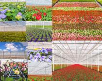 花海花丛摄影高清图片