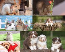 可爱狗狗兔子动物摄影高清图片