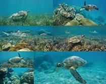 海底海龟摄影时时彩娱乐网站