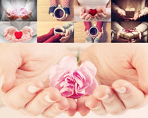 双手中的花朵咖啡摄影高清图片