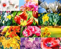 春天开放的花朵摄影高清图片
