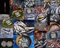 海鱼食物摄影高清图片