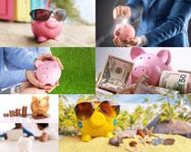 小猪存钱罐理财摄影高清图片