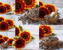 葵花籽与花朵摄影高清图片