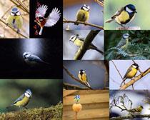 树枝上的小鸟摄影高清图片
