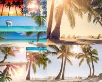 椰树沙滩风景拍摄高清图片