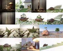 乌龟与货币摄影高清图片
