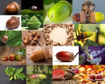 榛子食物摄影高清图片
