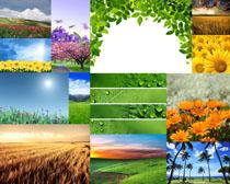 花朵叶子风景摄影高清图片