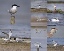 海鸟动物摄影高清图片