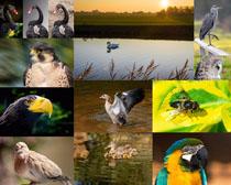 鸟类野生动物摄影高清图片