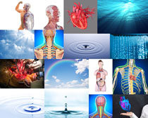 人体器官与水拍摄高清图片