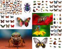 色彩昆虫摄影时时彩娱乐网站