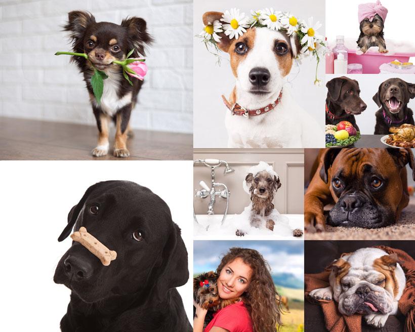 爱图首页 高清图片 动物图片 > 素材信息   关键字: 可爱狗狗宠物花朵