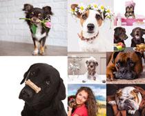可爱的国外狗狗摄影高清图片