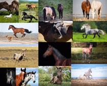 动物马拍摄高清图片