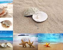 沙滩风景与贝壳摄影高清图片