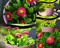 盆栽花朵拍摄高清图片