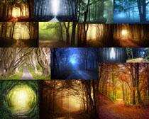 植物森林风光摄影高清图片