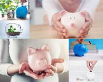 存钱罐小猪摄影高清图片