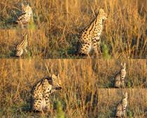 野外猫拍摄高清图片