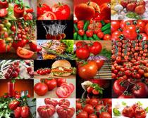 西红柿汉堡包摄影高清图片