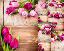桌面上的花朵拍摄高清图片