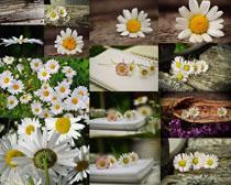唯美的小花朵摄影高清图片