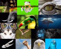 动物的眼神摄影时时彩娱乐网站