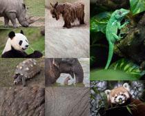 大象熊猫各种动物摄影时时彩娱乐网站