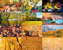 秋天景观风景拍摄高清图片