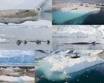 北极冰川风景拍摄高清图片